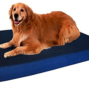 What's The Best Orthopedic Memory Foam Dog Bed? Our Complete Guide 10