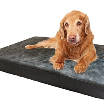 What's The Best Orthopedic Memory Foam Dog Bed? Our Complete Guide 21