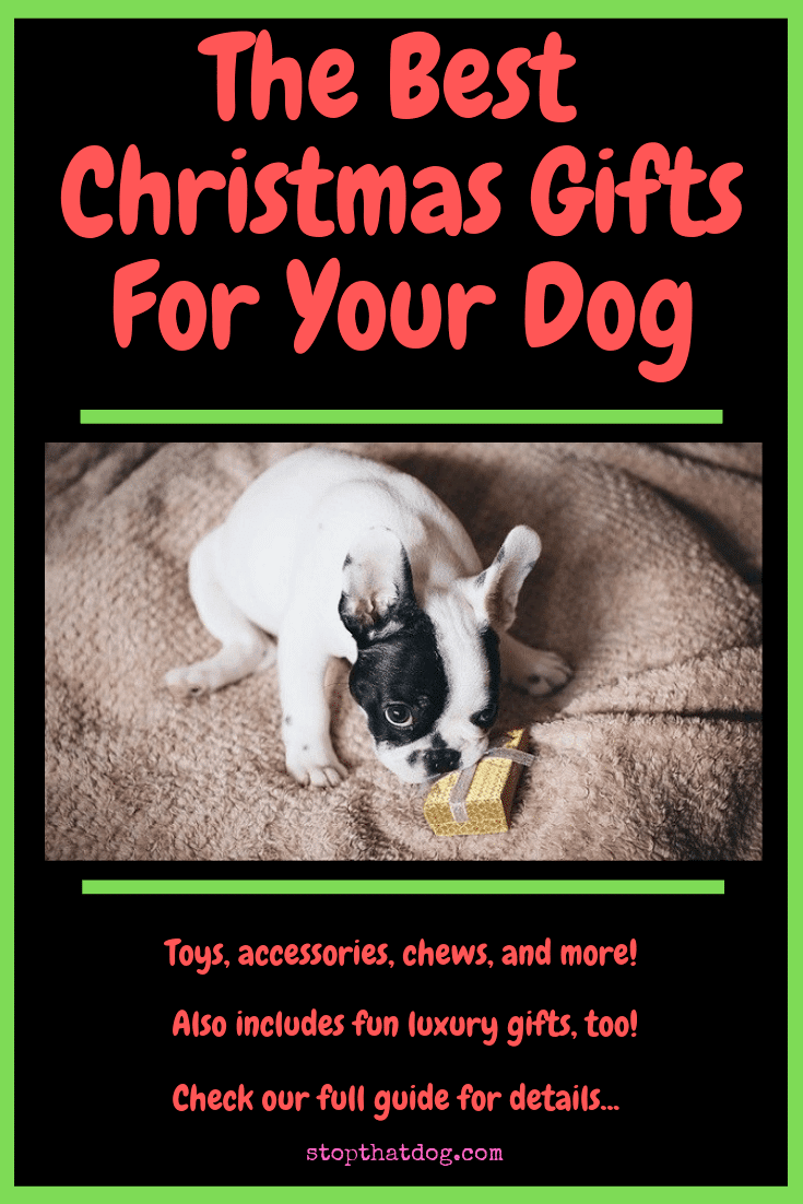 Looking to treat your dog this Christmas? If so, our guide reveals over 50 of the best gifts around. Includes chews, apparel, luxury gifts and more!