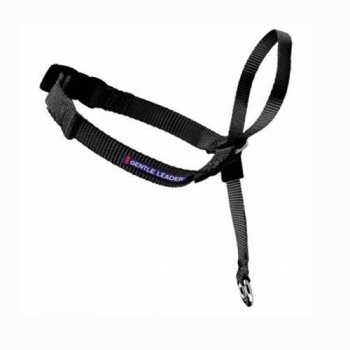 What Are The Best Leashes And Harnesses For Dogs That Pull? 8