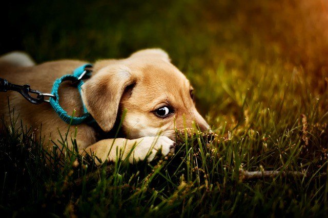 Why Is My Dog Eating Grass? Causes & Solutions 1