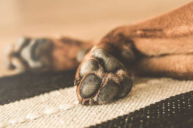 How To Trim Your Dog's Nails – Here's Our Comprehensive Guide 3