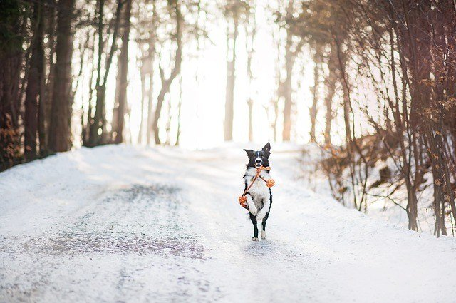 9 Key Tips For Protecting Your Dog In Winter 1