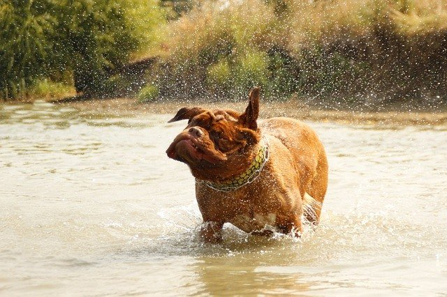 How To Give Your Dog A Bath - An In-Depth Guide 2