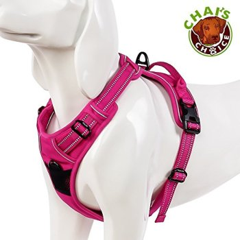 What's The Best Harness For My Dachshund? A Few Top Picks 7