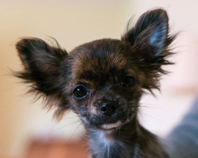 Can I Use Baby Shampoo On My Dog? Here's What You Need To Know 2