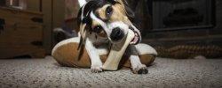 Himalayan Dog Chews - An In-Depth Guide 13