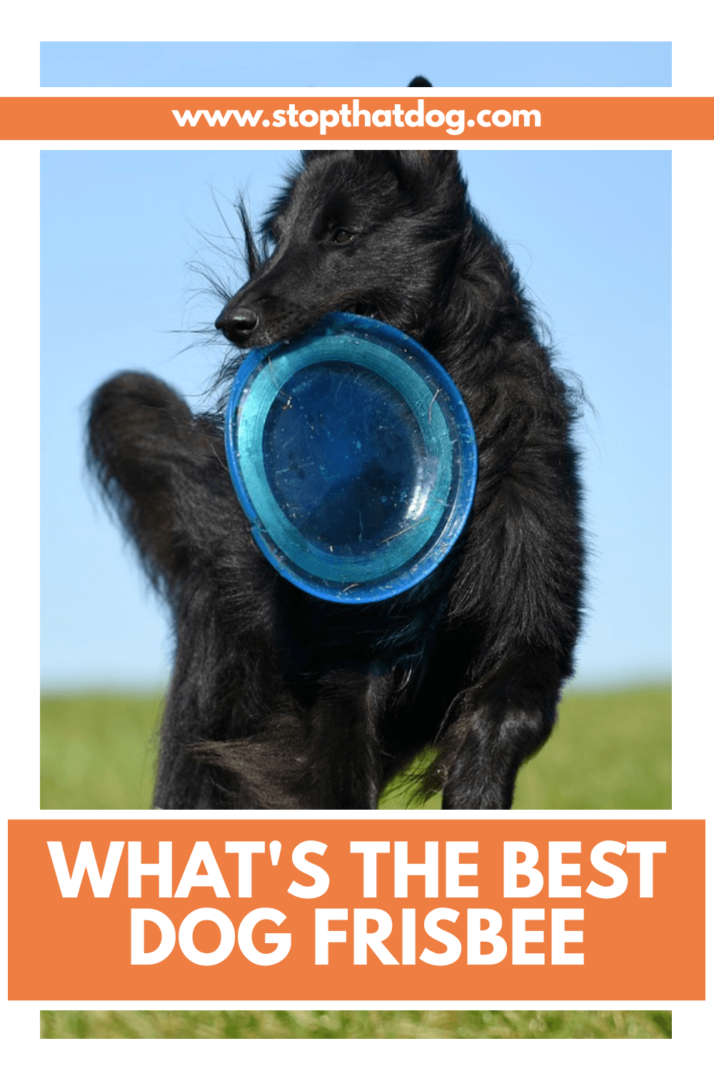 Looking for the best frisbees and flying disc toys for your dog? If so, our guide reveals dozens of options. Come and take a closer look.