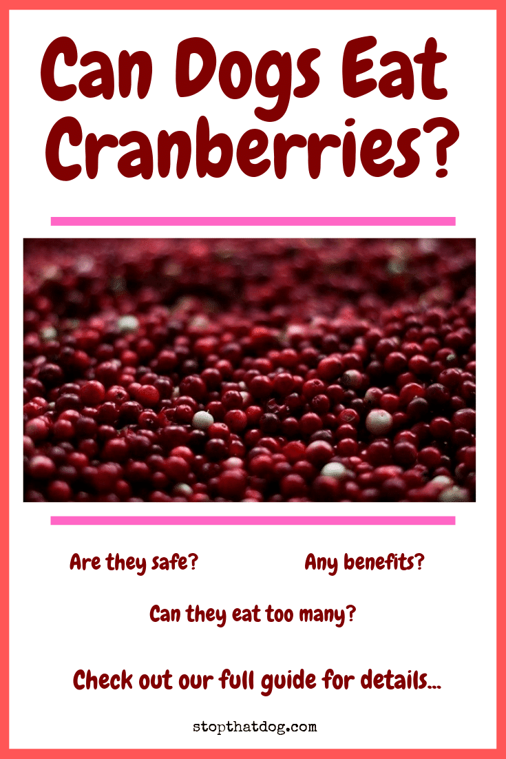 Wondering whether dogs can eat cranberries safely? If so, our guide reveals all the details you\'ll need to know, including the various pros and cons.