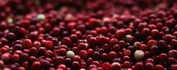 Can Dogs Eat Cranberries? 34