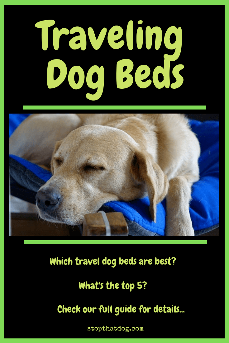 Looking to buy a travel dog bed? If so, our guide reveals the top options on the market, and highlights the top 5 that won\'t let you down.