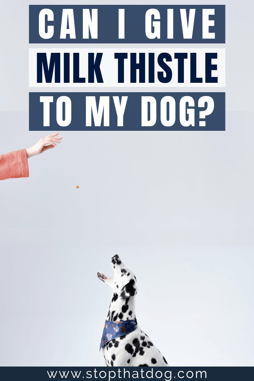 Want the best milk thistle dog supplements? If so, this guide reveals the best options on the market. These won\'t let you down. Come and take a look.