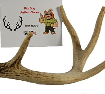 What Are The Best Elk & Deer Antlers For Dogs? Your Essential Guide 21