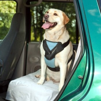 What Are The Best Dog Car Harnesses & Dog Seat Belts? Our Top Picks 11