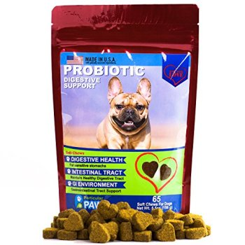 What Are The Best Probiotics For Dogs? Your Essential Guide 29