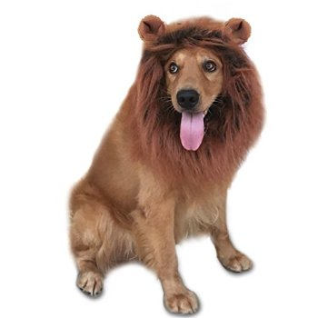 Where Can I Find A Lion Mane Dog Costume? Here's The Best 3