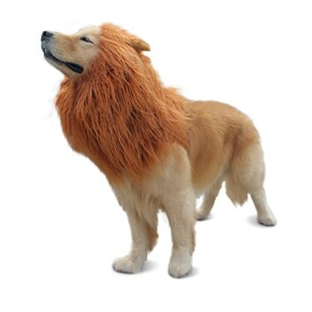 Where Can I Find A Lion Mane Dog Costume? Here's The Best 10