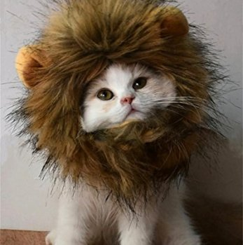 Where Can I Find A Lion Mane Dog Costume? Here's The Best 14