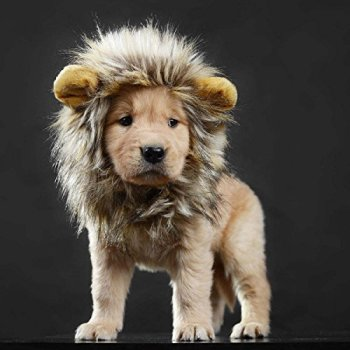 Where Can I Find A Lion Mane Dog Costume? Here's The Best 18
