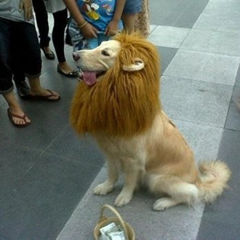 Where Can I Find A Lion Mane Dog Costume? Here's The Best 15