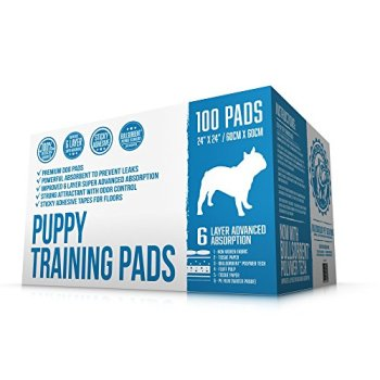 What's The Best Puppy Pee & Potty Training Pad? (+ Floor Trays & Holders!) 1