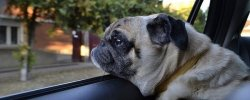 What Are The Best Dog Car Harnesses & Dog Seat Belts? Our Top Picks 18