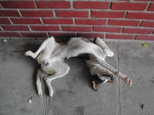 Do Dogs Have Belly Buttons? 1