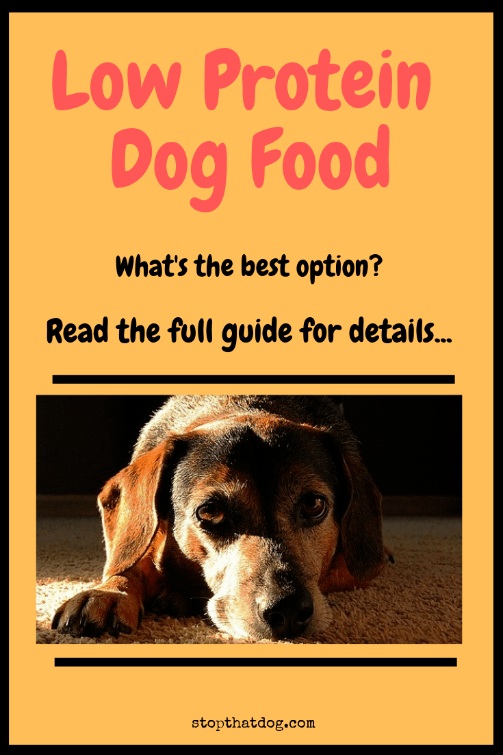 Looking for the best low protein dog food? If so, this guide reveals the top options on the market and explores some reasons why it might be beneficial.