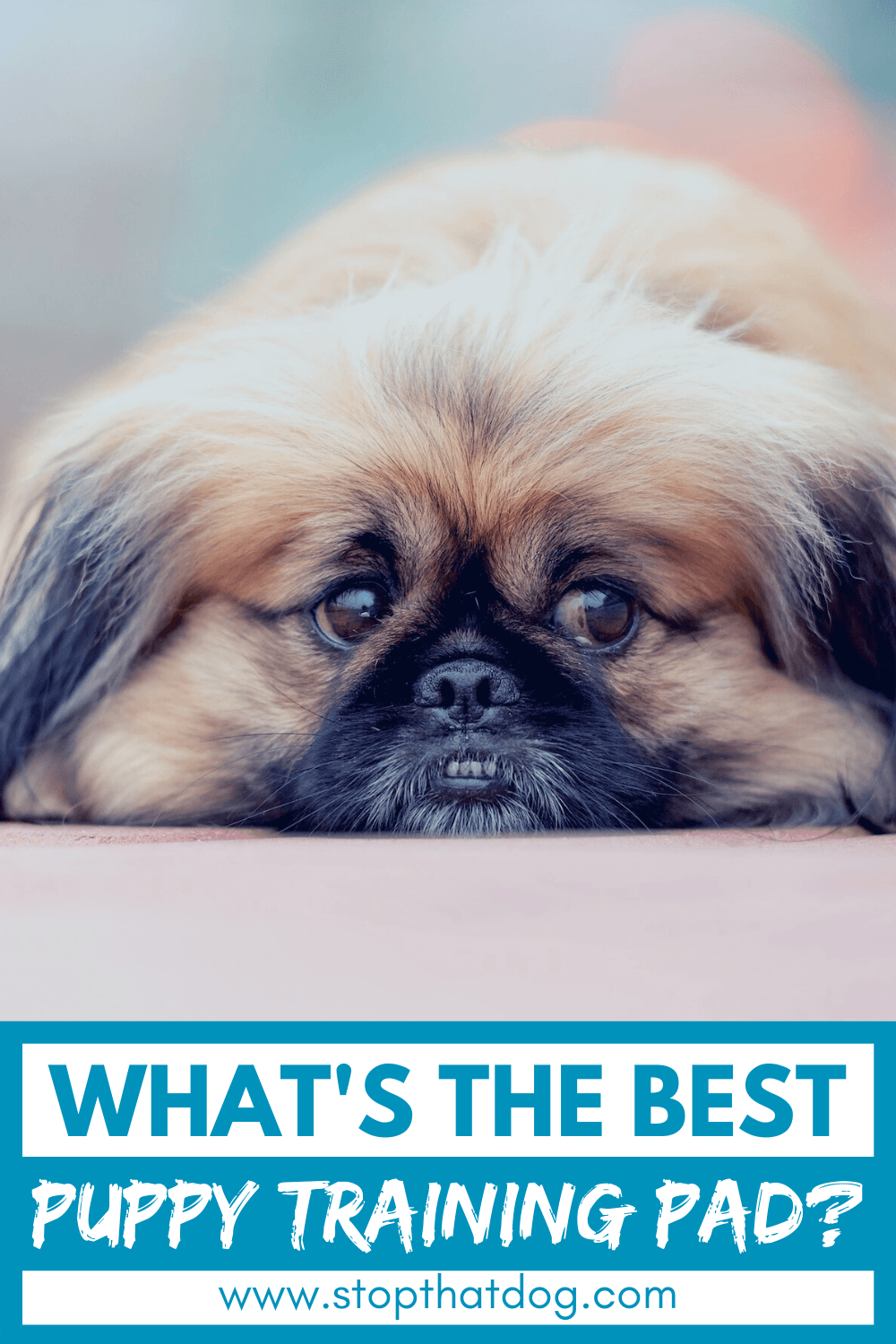 Want the best puppy training pads? If so, this guide reveals the best options on the market. These won\'t let you down. Come and take a look.