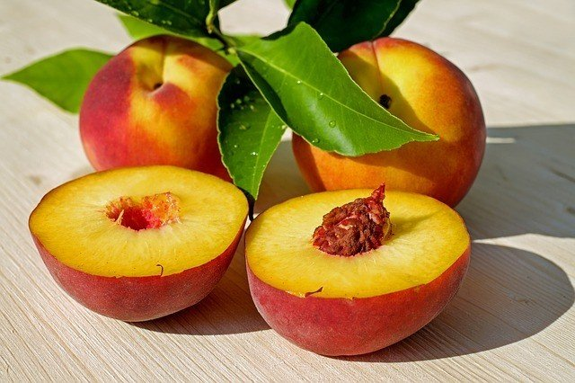 Can Dogs Eat Peaches? 1