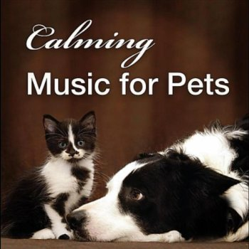 Soothing Music For Dogs - The Best Options For Relaxing Your