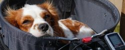 What Are The Best Bike Baskets For Dogs In 2020? Here's An In-Depth Guide 28