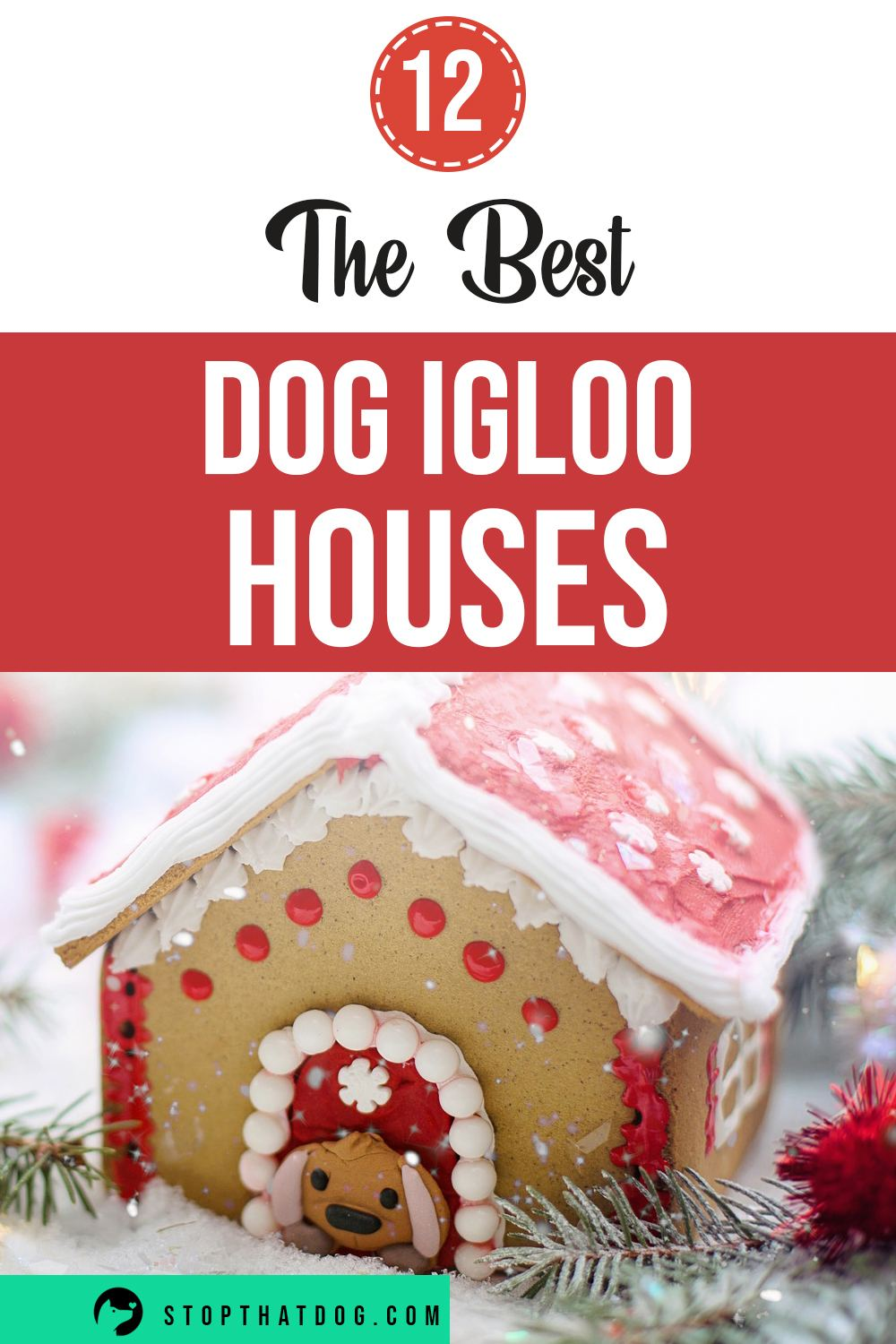 Igloo dog houses offer a lot of comfort and security for any dog. This guide reveals the best dog igloo houses on the market.