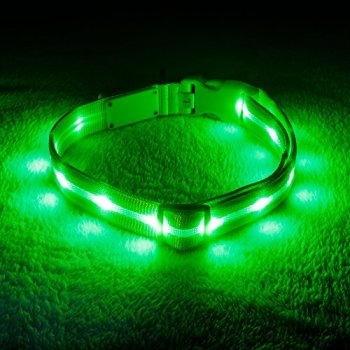 The Best LED Dog Collars - Our In-Depth Guide (2020) 6