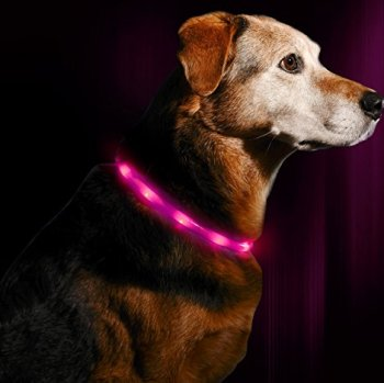 The Best LED Dog Collars - Our In-Depth Guide (2020) 3