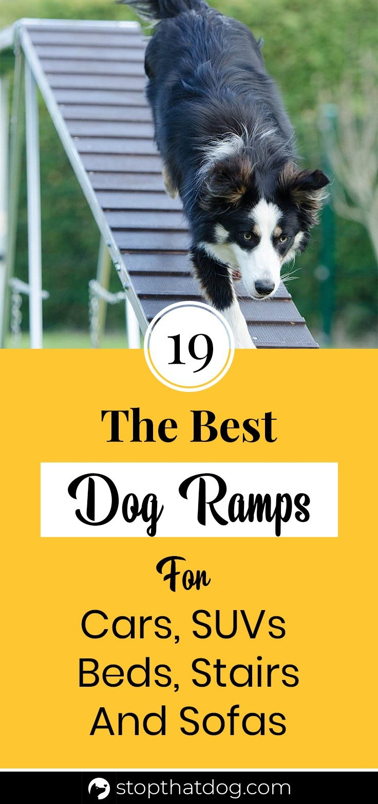 Need a ramp to help your dog get in your vehicle or just on the sofa? If so, this guide highlights many of the best dog ramps on the market.