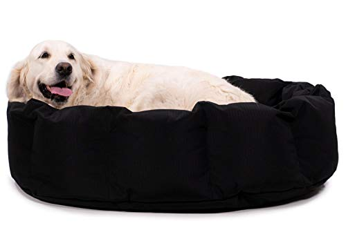 What Are The Best Elevated Dog Beds? (2020) 24