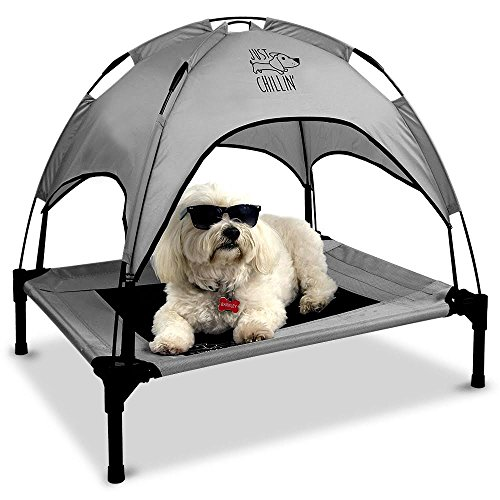 What Are The Best Elevated Dog Beds? (2020) 11