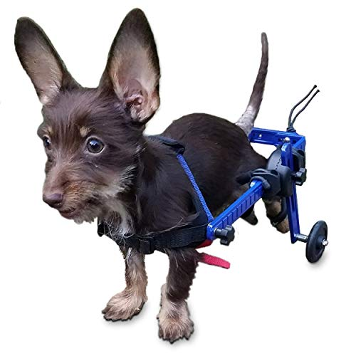 The Best Dog Wheelchairs For Small, Medium, & Large Breeds Reviewed (2020) 10