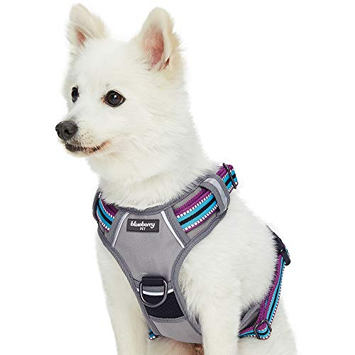 What's The Best Small Dog Harness? Our Favorite Picks 14