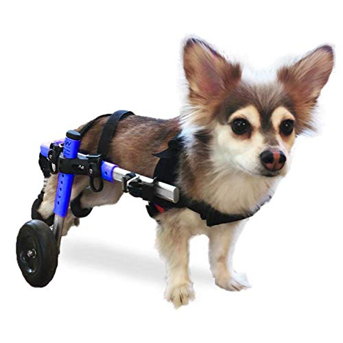 The Best Dog Wheelchairs For Small, Medium, & Large Breeds Reviewed (2020) 8