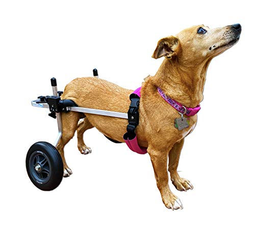 The Best Dog Wheelchairs For Small, Medium, & Large Breeds Reviewed (2020) 9