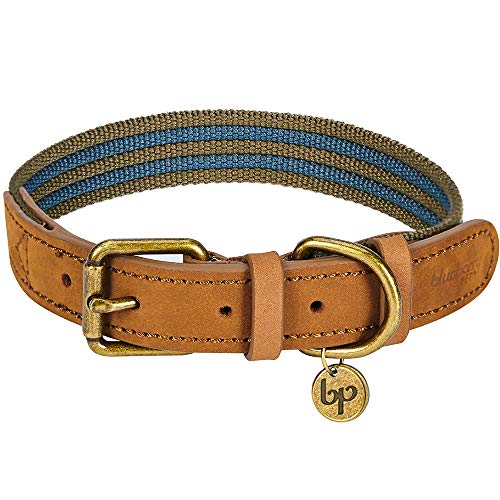 What's The Best Leather Dog Collar On The Market? (2020) 12