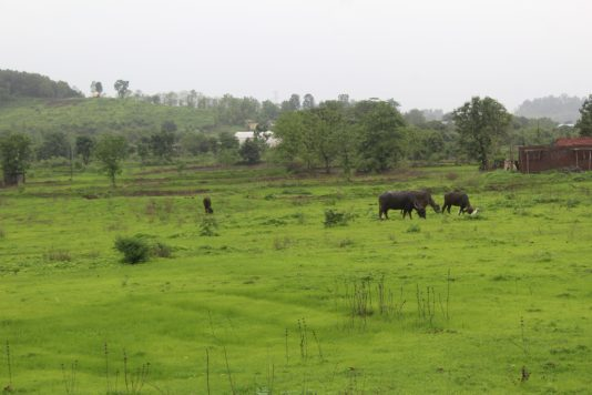 Malshej Ghat - Scenery 1