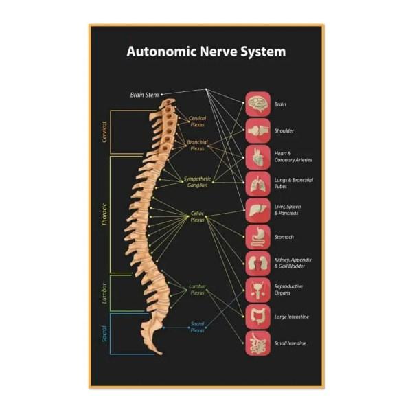 1341. Poster - Nerve System Justus Chiropractic Marketing