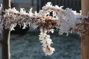 Winter Frost Seil Baum