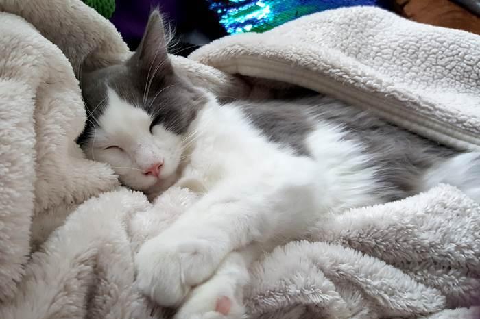 Katze Katzen Jack Schlafmütze