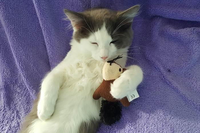 Katze Katzen Jack
