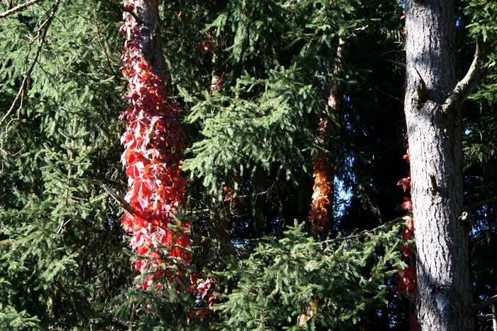 Wald Mühldorfer Hart Herbst