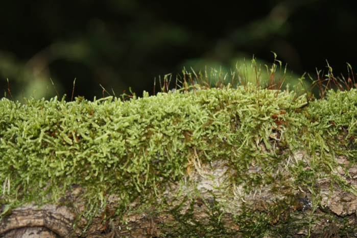 Wald Mühldorfer Hart Moos